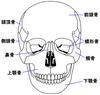 300px-Head_bone